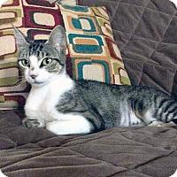 Adopt A Pet :: Mila - Arlington/Ft Worth, TX
