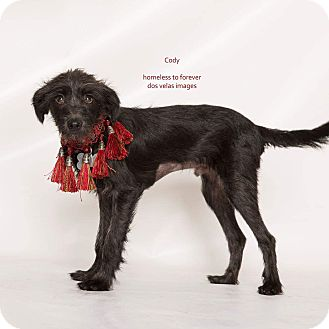 Terrier (Unknown Type, Small) Mix Dog for adoption in Arcadia, California - Cody