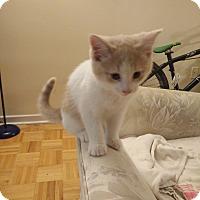 Adopt A Pet :: Mo - Toronto, ON