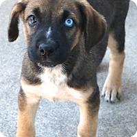 Adopt A Pet :: Tahoe - MEET ME - Woonsocket, RI