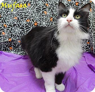 Domestic Longhair Cat for adoption in Bucyrus, Ohio - Mufasa