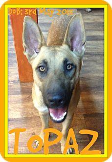 German Shepherd Dog Mix Dog for adoption in Allentown, Pennsylvania - TOPAZ