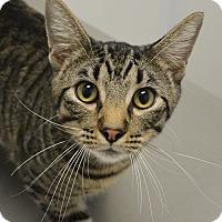 Adopt A Pet :: Runt - Springfield, IL