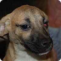 Adopt A Pet :: penny - Lebanon, TN