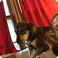 Adopt A Pet :: Mia - Franklinville, NJ
