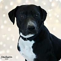 Adopt A Pet :: Jackson - Santa Maria, CA