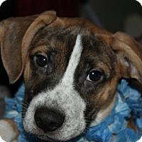 Adopt A Pet :: D15 Litter-Elliot - Livonia, MI
