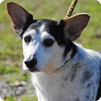 Adopt A Pet :: Sally - Anniston, AL