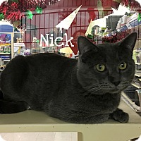Adopt A Pet :: Nick - Foothill Ranch, CA