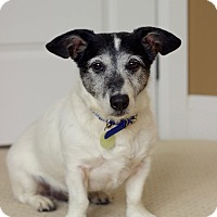 Adopt A Pet :: ROCKY - Toronto/GTA, ON