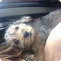 Adopt A Pet :: Reese - Hazard, KY