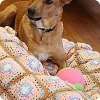 Adopt A Pet :: Holly Beri - Homewood, AL