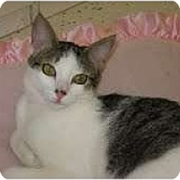 Adopt A Pet :: Janessa - Phoenix, AZ