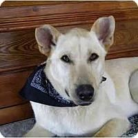 Adopt A Pet :: Dryden - Rigaud, QC