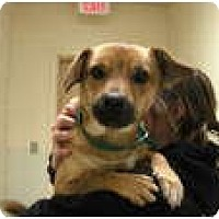 Adopt A Pet :: Kyle - Georgetown, KY