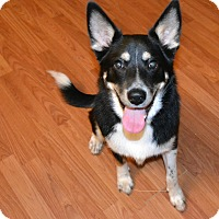 Adopt A Pet :: Bandit - Hagerstown, MD