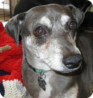Beagle/Terrier (Unknown Type, Medium) Mix Dog for adoption in Phoenix, Arizona - Penny & Pete