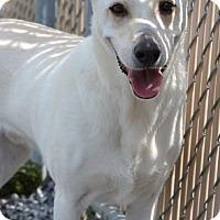 Adopt A Pet :: T.J. - Brattleboro, VT