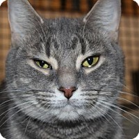 Adopt A Pet :: Patrice - Caistor Centre, ON