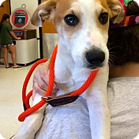 Adopt A Pet :: Benton adoption pending - East Hartford, CT