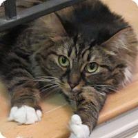 Adopt A Pet :: Justin - Davis, CA
