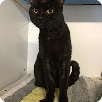 Adopt A Pet :: Nelson - Novato, CA