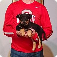 Adopt A Pet :: Matilda - New Philadelphia, OH