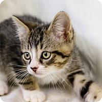 Adopt A Pet :: Butterfinger - Oakland Park, FL