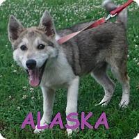 Adopt A Pet :: Alaska - Batesville, AR