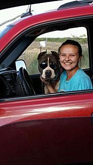 American Pit Bull Terrier Dog for adoption in Denver City, Texas - Diesel