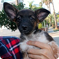 Adopt A Pet :: Prickle - Los Angeles, CA