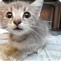 Adopt A Pet :: Liliana - Douglasville, GA