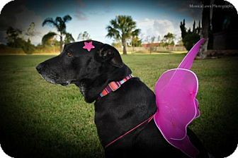 Labrador Retriever Mix Dog for adoption in Houston, Texas - Ruby