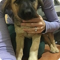 Adopt A Pet :: Maria - Phoenix, AZ