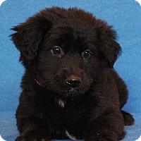 Adopt A Pet :: Aja - Waldorf, MD