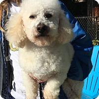 Adopt A Pet :: Luke - Temecula, CA