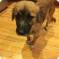 Adopt A Pet :: Hera - Newport, KY