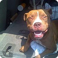 Adopt A Pet :: Carson URGENT - San Diego, CA