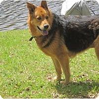 Adopt A Pet :: Helen aka Stash - Albany, NY