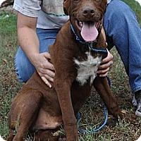 Adopt A Pet :: Snickers - Pocahontas, AR