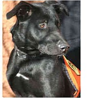 Adopt A Pet :: Max -in Flagstaff - Scottsdale, AZ
