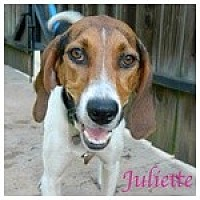 Adopt A Pet :: Juliette - Newnan, GA