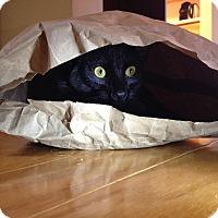 Adopt A Pet :: Odessa - Apex, NC