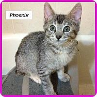 Adopt A Pet :: Phoenix - Miami, FL