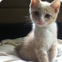 Adopt A Pet :: Brayden - Byron Center, MI