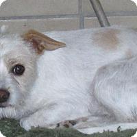 Adopt A Pet :: Dagwood - San Ysidro, CA