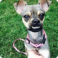 Adopt A Pet :: Eleanor - Chicago, IL