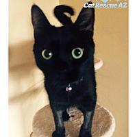 Adopt A Pet :: Finnegan - Tucson, AZ
