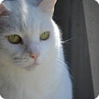 Adopt A Pet :: Destiny (in foster) - Summerville, SC
