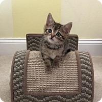 Adopt A Pet :: Milo - Island Park, NY